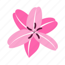 floral, flower, lily, nature, passion icon