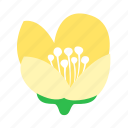 eternal, floral, flower, jasmine, love, nature icon