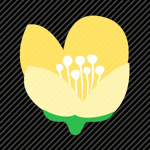 eternal, floral, flower, jasmine, love, nature icon