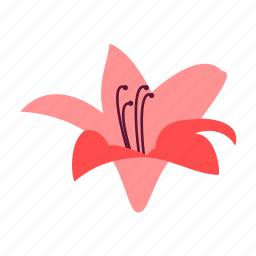 amaryllis, done, floral, flower, nature, well icon