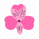 alstroemeria, floral, flower, nature, prosperity icon