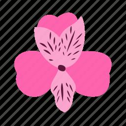 alstroemeria, floral, flower, nature, prosperity icon