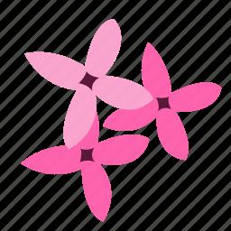 bouvardia, enthusiasm, floral, flower, nature icon