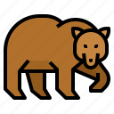 animal, bear, wildlife, zoo