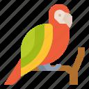 wildlife, animal, parrot, zoo
