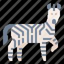 animal, wildlife, zebra, zoo icon