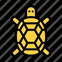 turtle, animal, zoo, tortoise, water