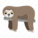 animal, lazy, mammal, sloth, slow, wildlife, zoo