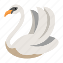 animal, beautiful, bird, elegance, romance, swan, zoo