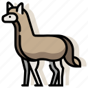 alpaca, animal, llama, mammal, wildlife, zoo icon