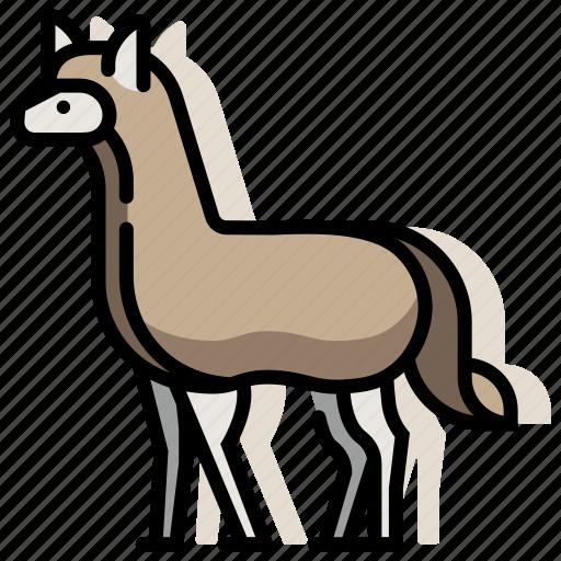 alpaca, animal, llama, mammal, wildlife, zoo icon