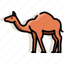 animal, camel, desert, dromedary, journey, mammal, zoo icon