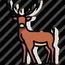 animal, antler, deer, mammal, reindeer, stag, wildlife