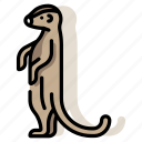 animal, mammal, meerkat, mongoose, suricate, wildlife, zoo icon