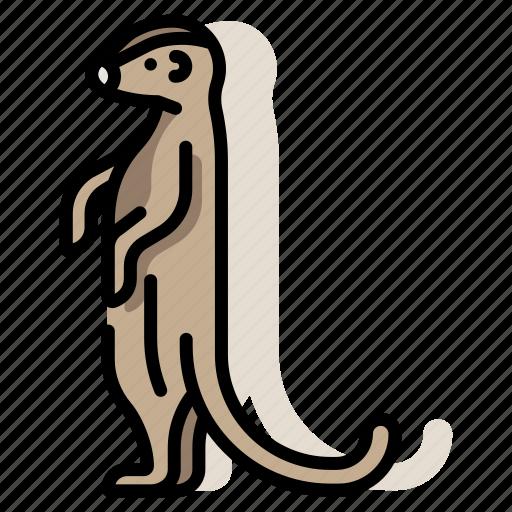 animal, mammal, meerkat, mongoose, suricate, wildlife, zoo icon