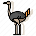 african, animal, bird, flightless, ostrich, safari, zoo icon