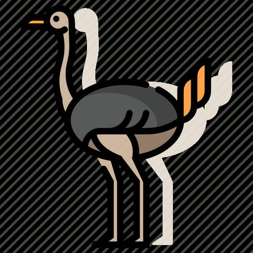 african, animal, bird, flightless, ostrich, safari, zoo icon