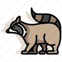 animal, furry, pet, raccoon, wildlife, zoo icon