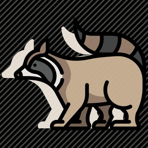 animal, furry, pet, raccoon, wildlife, zoo icon