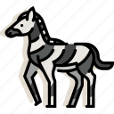 africa, animal, mammal, safari, wildlife, zebra, zoo icon