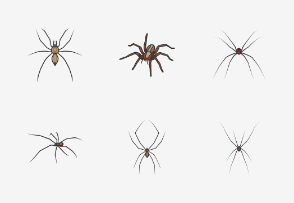 Arachnids - Colored
