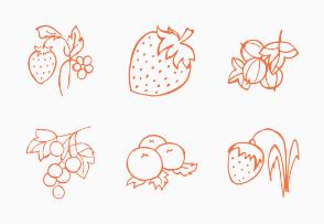 Berries sketch