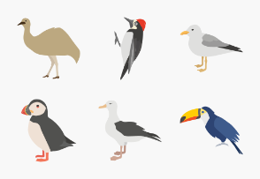 Birds Color