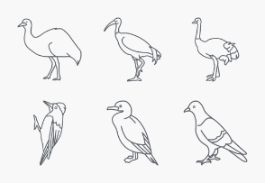 Birds Outlines